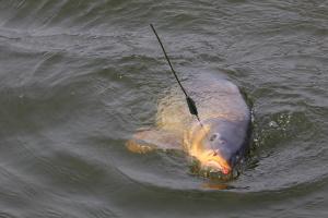 Зимняя рыбалка на крупную рыбу